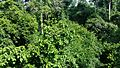 KakumNationalPark forestReserveView.jpg
