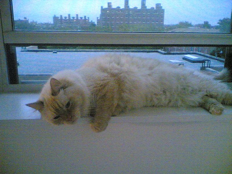 ملف:Katzen kentst.jpg