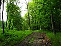 Kemence, Hungary - panoramio (13).jpg
