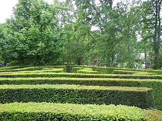 Keukenhof maze 1.jpg