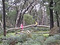 Kids Playing on Fallen Tree at Wannon Crossing Campground.jpg