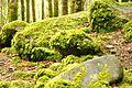 Killarney National Park - Torc Waterfall (7107453911) (2).jpg