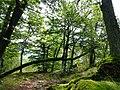 Kirschweiler, Naturschutzgebiet Silberich – Kirschweiler Festung - panoramio (3).jpg