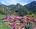 Kirstenbosch Gardens - South Africa (2417728337).jpg