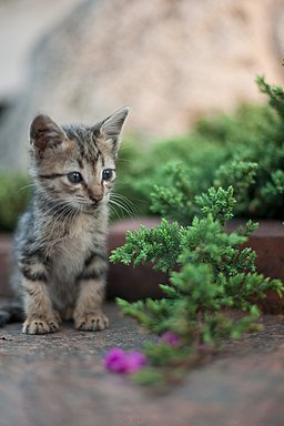 Kitten in Rizal Park, Manila