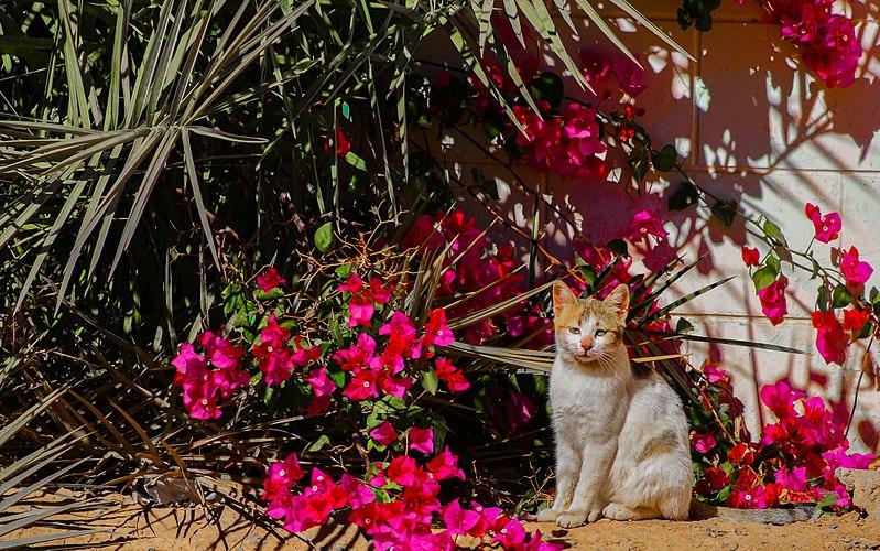 File:Kitty around flowers.jpg