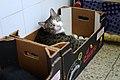 Kitty in a box.jpg