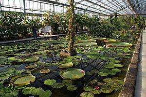 Kobe Animal Kingdom - Greenhouse interior