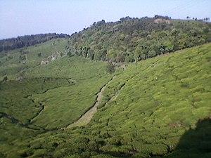 Kodanad - View from Kodanad countryside