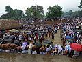 Kottiyoor temple festival IMG 9542.JPG