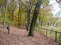Krumme Lanke - Rundweg (Circular Path) - geo.hlipp.de - 29910.jpg