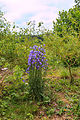 Kvetoucí rostliny u Bělečského písníku 01.jpg