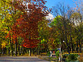 Kyiv Internatsionalny Park11.JPG