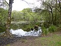 L'etang de la foret a brandivy - panoramio (13).jpg