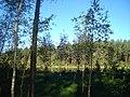 Līksna Parish, LV-5456, Latvia - panoramio - BirdsEyeLV (1).jpg