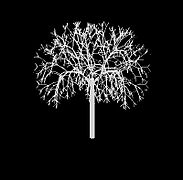 L-system Tree07.jpg