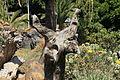 La Palma - Los Llanos - Carretera a Puerto Naos - Parque Antonio Gómez Felipe (Morera) 42 ies.jpg