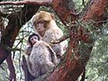 La montagne des singes - panoramio.jpg