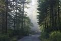 Lady Bird Johnson Grove in Northern California LCCN2013632251.tif