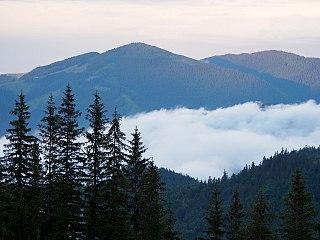 Carpathian montane conifer forests