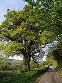 Lane between Hedge Cross and Hartswell - geograph.org.uk - 429921.jpg