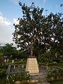 Laoac,Pangasinanjf8476 28.JPG