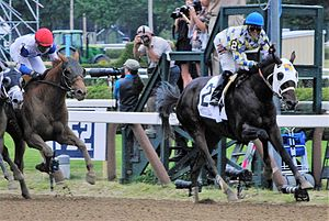 Jose Ortiz (jockey) - Ortiz winning the 2016 Jim Dandy Stakes on Laoban