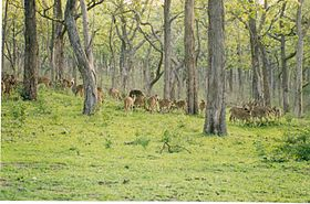 Image illustrative de l'article Parc national de Bandipur