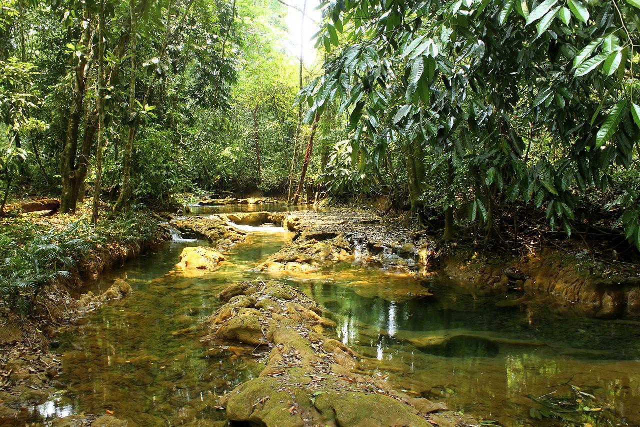File las preciosas cascadas de agua azul chiapas 19 jpg for Cascadas de agua