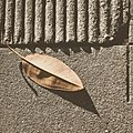 Leaf over Cement (5046999324).jpg