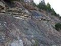 Leitchfield Formation (Upper Mississippian; Western Kentucky Parkway roadcut, southernwestern side of Leitchfield, Kentucky, USA) (42233792632).jpg