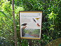 Leon Levy Nature Preserve What Lives Here Eleuthera 2013.JPG