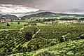 Les champs de kabylie bejaia.jpg