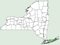Leucanthemella serotina NY-dist-map.png