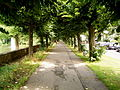 Leverkusen - Ludwig-Rehbock-Park 03 ies.jpg