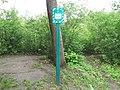 Lilac grove, Dykanskyi Landscape Park (10.05.19) 01.jpg