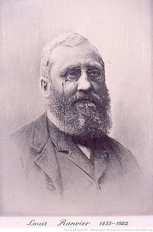 Louis-Antoine Ranvier - Louis-Antoine Ranvier