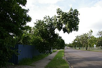 Ludmilla, Northern Territory - Looking up Bagot Road in Ludmilla