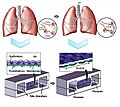 Lung on the chip.jpg