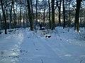 Lviv, forest on Suhiv - panoramio (1).jpg