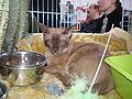 MTP Cat Show 2230154.JPG