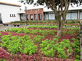 Madeira em Abril de 2011 IMG 2275 (5665189836).jpg