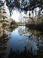 Magnolia Plantation and Gardens - Charleston, South Carolina (8555382107).jpg
