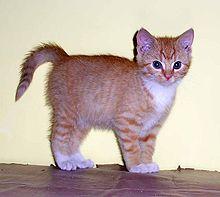 kit chaton