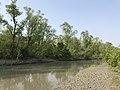 Mangrove forest at nijhum dwip.jpg