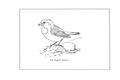 Manual of Bird Study 0055-20.png