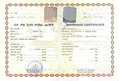 Marriage Certificate Eritrea (translated date).png
