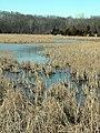 Marsh1.jpg