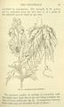 Medicinal Herbs Poisonous Plants-068.png