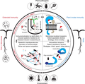 Microbiota-mediated extension of the plant immune system.png
